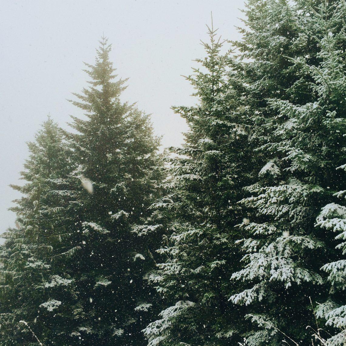 Rejs til udlandet og hold en anderledes jul